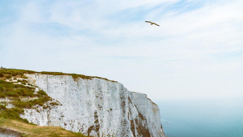 Die Kreidefelsen von Dover. Oberhalb kreist eine Möve. Blaues Meer und blauer Himmel sind zu erkennen.
