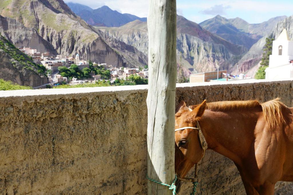 Pferd parkt vor einem Haus in Iruya Argentinien